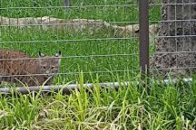 International Exotic Animal Sanctuary, Boyd, United States