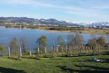 Pfaffikersee Lake, Pfaeffikon, Switzerland