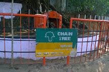 Chain Tree of Karinthandan, Vythiri, India