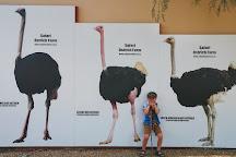 Safari Ostrich Show Farm, Oudtshoorn, South Africa