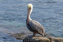 Breakwater, Monterey, United States