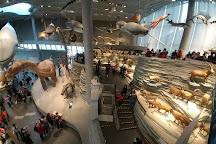 Shanghai Natural History Museum (Jing'an), Shanghai, China
