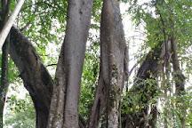 One Tree Forest, Ruili, Ruili, China