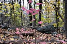 Ringing Rocks County Park, Upper Black Eddy, United States