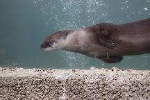 Amazona Zoo, Cromer, United Kingdom