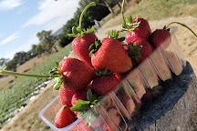Beerenberg Farm, Hahndorf, Australia