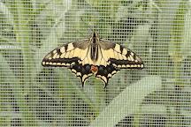 Casa delle Farfalle, Milano Marittima, Italy