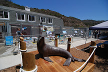 Pacific Marine Mammal Center, Laguna Beach, United States