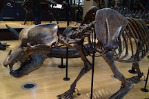 Amherst College Museum of Natural History, Amherst, United States
