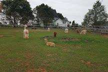 Green Gable Alpacas, Prince Edward Island, Canada