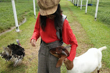Jelita Ostrich Farm, Seremban, Malaysia