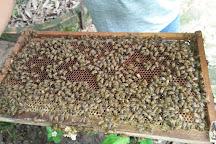 Phu Quoc Bee Farm, Phu Quoc Island, Vietnam
