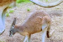 Eureka Springs Safari Park, Eagle Rock, United States