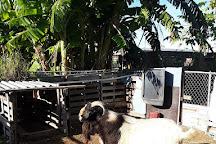 Ol' Freetown Farm, Freeport, Bahamas