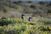 Meerkat Adventures, Oudtshoorn, South Africa