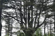 Tannourine Cedar Forest Nature Reserve, Tannourine, Lebanon