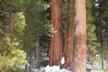 Mariposa Grove, Yosemite National Park, United States
