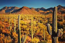 Saguaro National Park, Tucson, United States