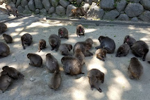 Takasakiyama Nature Zoo, Oita, Japan