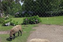 Rocklands Petting Farm, Hermanus, South Africa