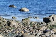 Seal Bay Nature Park, Courtenay, Canada
