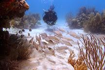 Culebra Divers, Culebra, Puerto Rico