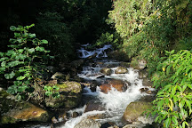 Sendero Los Quetzales (The Quetzales Trail), Boquete, Panama