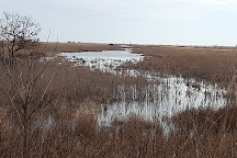 Edwin B. Forsythe National Wildlife Refuge, Oceanville, United States