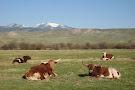 Grant-Kohrs Ranch