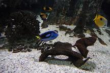 Aquarium de Noirmoutier, Ile de Noirmoutier, France