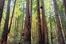 Armstrong Redwood State Reserve, Guerneville, United States