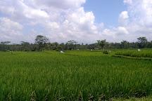 Bali Pulina Coffee Plantation, Gianyar, Indonesia