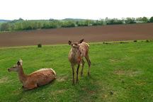 Boszenfa Deer Farm - Petting Zoo, Boszenfa, Hungary
