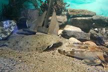 Maine State Aquarium, Boothbay Harbor, United States
