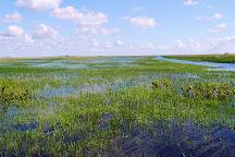 Airboat In Everglades, Miami, United States