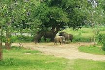 Ridiyagama Safari Park, Hambantota, Sri Lanka
