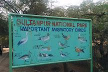 Sultanpur National Park, Gurugram (Gurgaon), India