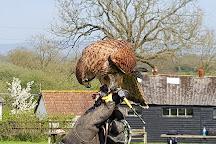 Yarak Bird of Prey, Cullompton, United Kingdom