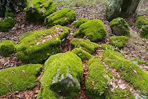 Petrified Forest, Calistoga, United States