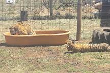 Jugomaro Predator Park, Groblersdal, South Africa