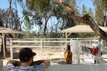 The Alpaca Hacienda, Temecula, United States