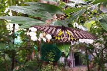 Bangkok Butterfly Garden and Insectarium, Bangkok, Thailand