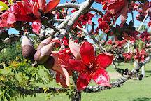Townsville Palmetum, Townsville, Australia