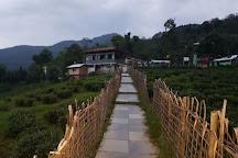 Temi Tea Garden., Sikkim, India