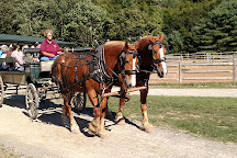 Carriages of Acadia, Acadia National Park, United States
