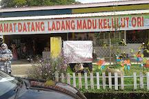 Ladang Madu Kelulut Ori DUKUN JAYA, Alor Setar, Malaysia