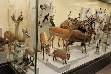 Musee Paleontologique de Zurich, Zurich, Switzerland