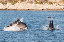 Dolphin Watching Tour - Murter, Murter Island, Croatia