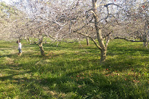 Crooked Run Orchard, Purcellville, United States