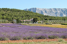 Tours in Provence - Day Tours, Aix-en-Provence, France